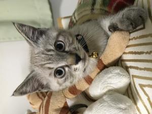 保護猫ぐり2